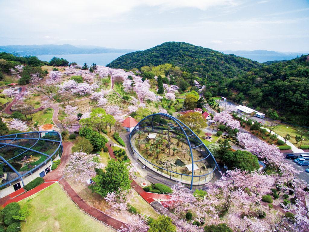大崎自然公園の桜が見頃です | 見たい。食べたい。遊びたい。 ぶらり[BuRaRi] 長崎【大村線】佐世保